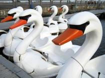 swan-boats-2